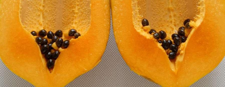 papaya_digestion